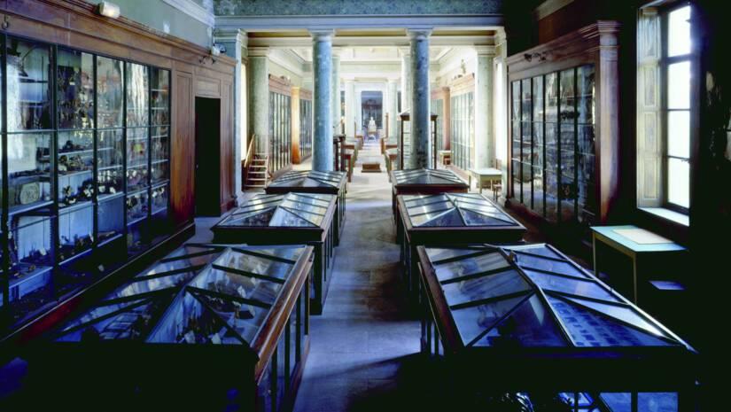 Conservatoire d'anatomie - ® Drac Occitanie