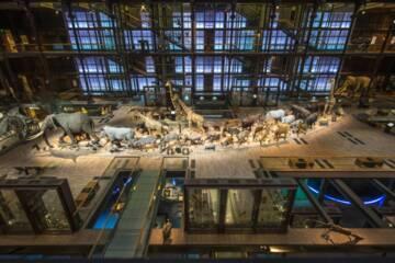 Paris, Grande Galerie de l'Evolution, vue d'ensemble de la caravane africaine (c) MNHN