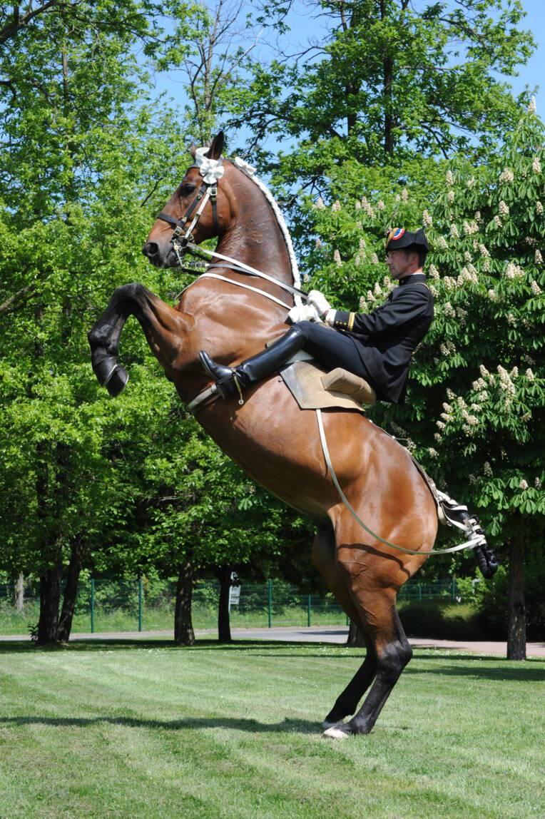 Cavalier du Cadre noir