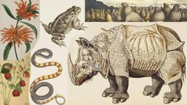 illustration ancienne : rhinocéros, grenouille, serpent, fleurs etc.