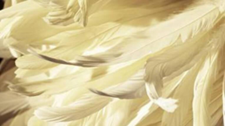 plumassier