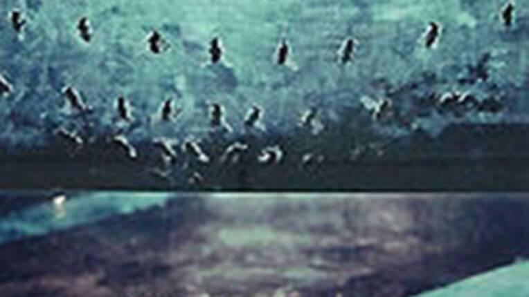 Patrick Tosani - Les abeilles - 1996
