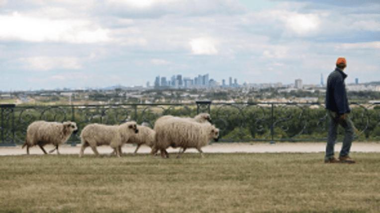 Illustration des actes Rendez-vous aux jardins 2019 - Les animaux au jardin