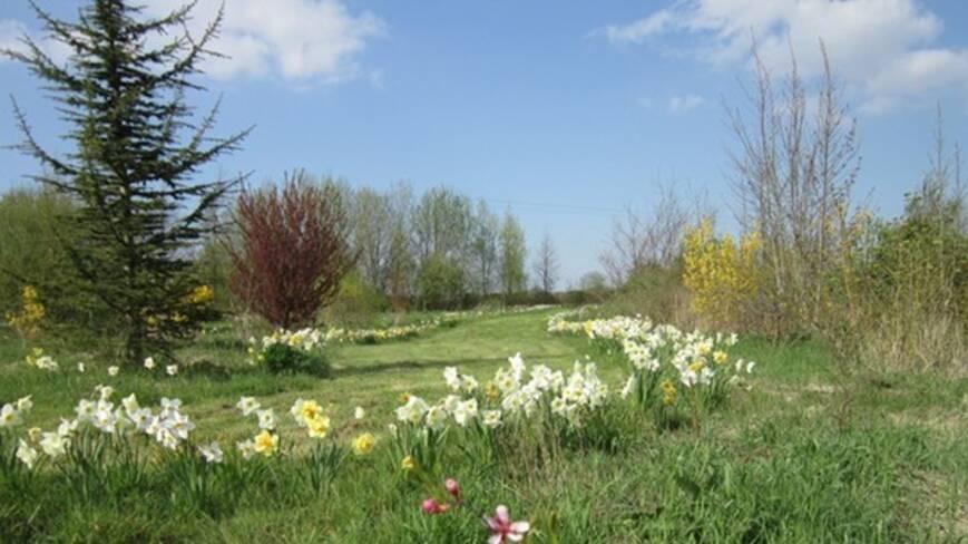 Prairie ensolleilée avec fleurs sauavges, jonquilles et épicéas