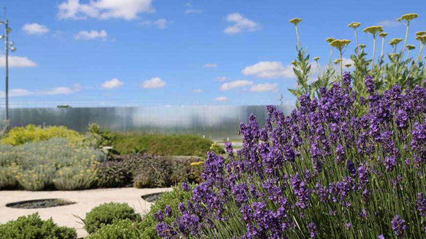 Vue rapprochée des parterres de fleurs du parc du musée avec sa façade en arrière plan refletant la lumière et le ciel