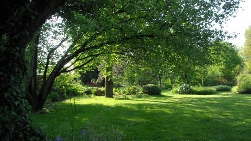 Photo d'un jardin ombragé par ses arbres