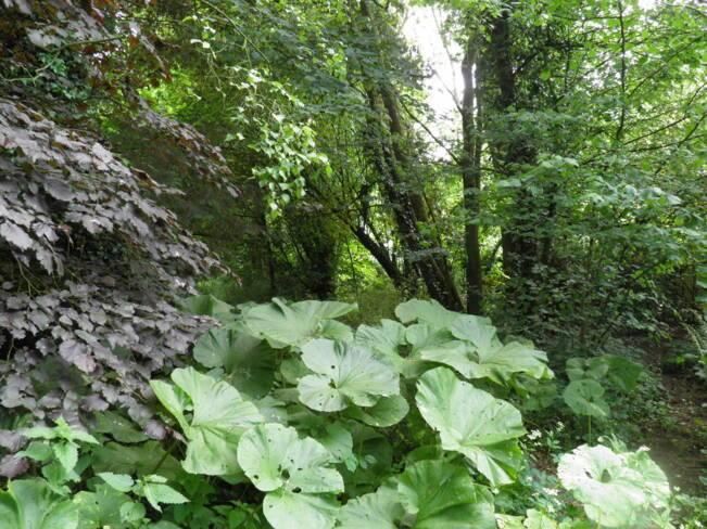 Somme, Buigny-les-Gamaches, le jardin sauvage