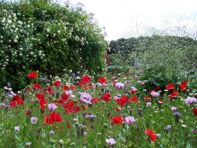 Somme, Saint-Valery-sur-Somme, L'Herbarium