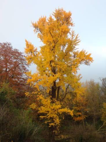 Aisne, Saint-Gobain, le jardin du Grand Logis