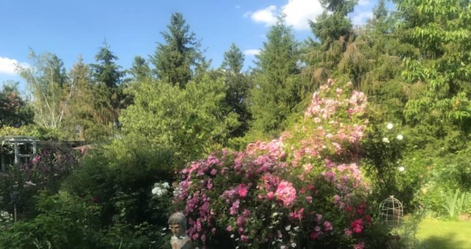 (18) Vierzon : Mon jardin senteurs de roses