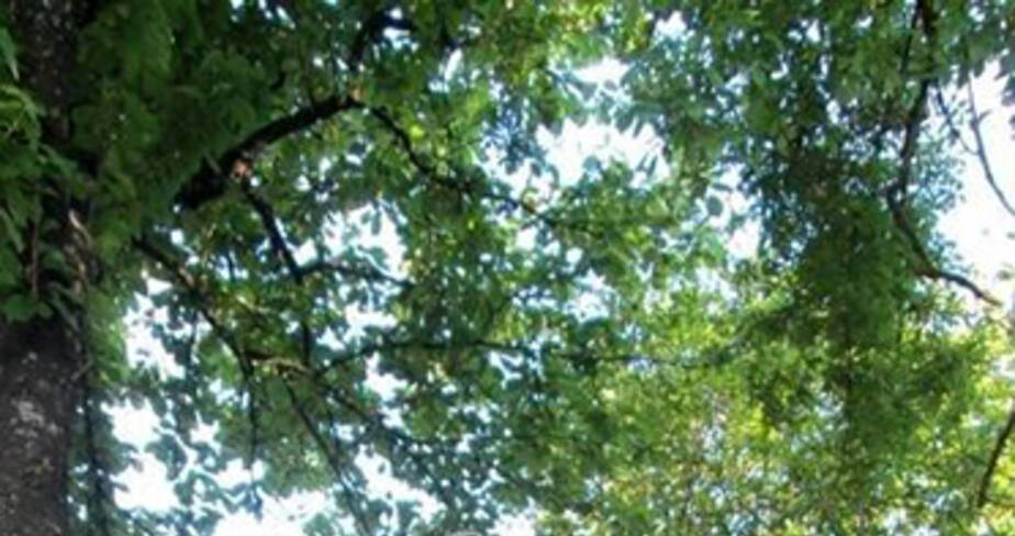 Jardin-de-Landon-VF.jpg