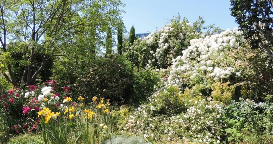 (45) Orléans : jardin des plantes