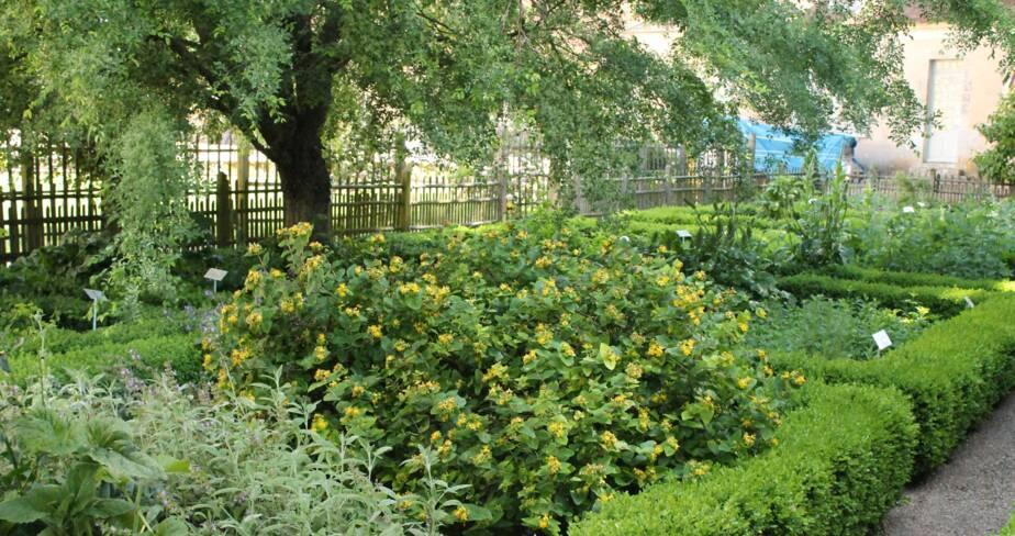 (28) Châteaudun : jardin du château