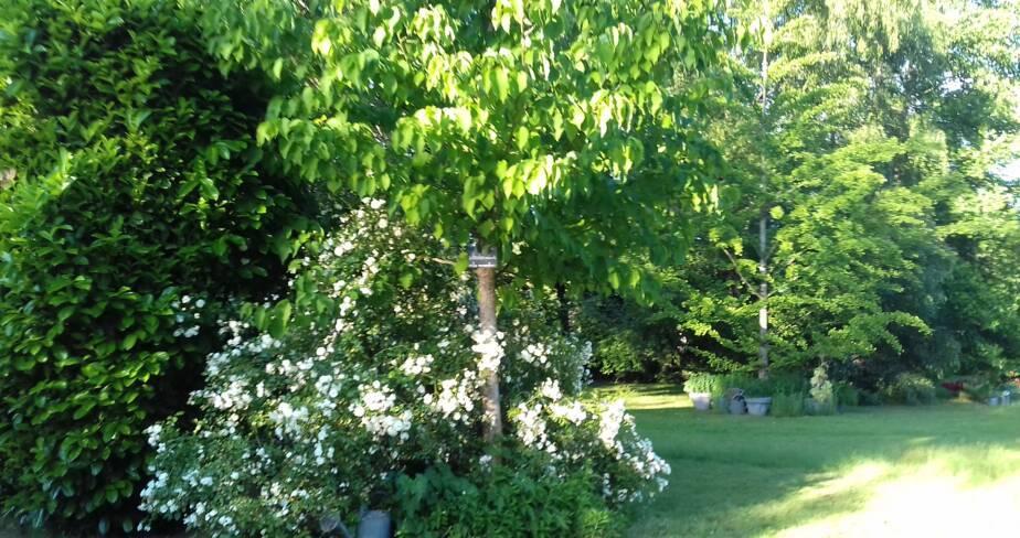 (18) Aubigny sur Nère : Le Buisson de la Gariole