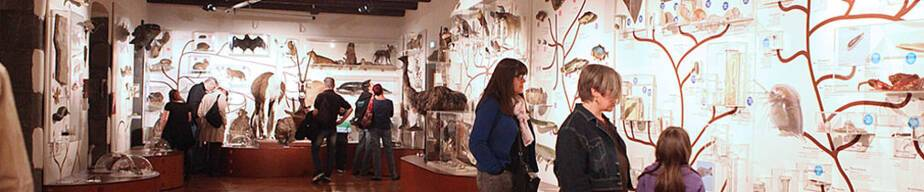 museum_lecoq.jpg