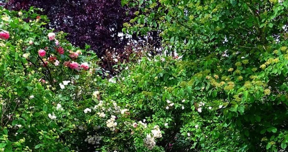 (18) Vignoux-sous-les-Aix : Le Haut jardin