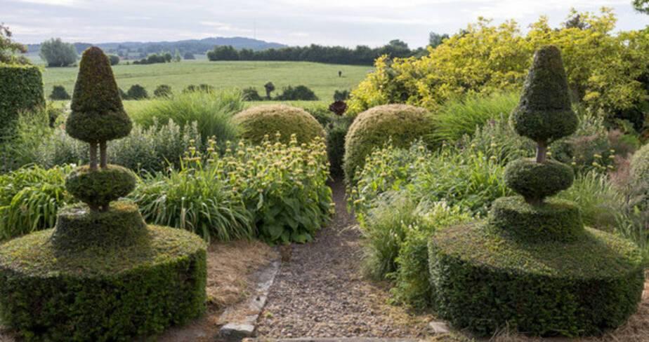 Au premier plan, vue sur des buissons taillées et en arrière plan des collines lointaines