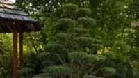 Atelier jardin de Cressia – 39270 Cressia