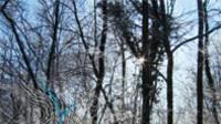 n°20 : Tertres et murées : les forêts du Chatillonnais