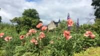 Fleurs sauveges au premier plan, église et arbres au second