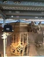 Cathédrale de Strasbourg - galerie Goetz - un chapiteau après restauration