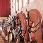 La galerie des disciplines - Domaine de Chantilly
