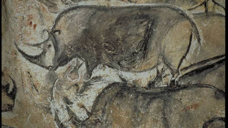 Grotte Chauvet-Pont-d'Arc - rhinocéros