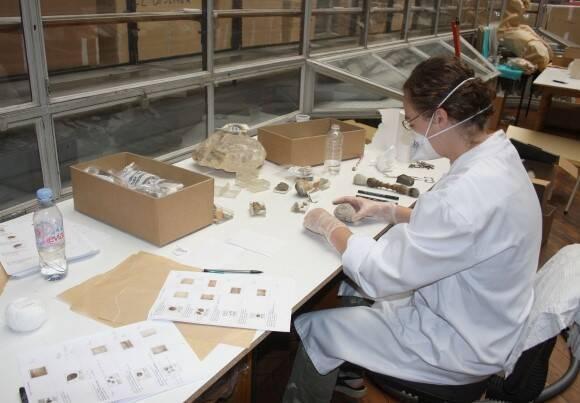 Equipe scientifique au travail © Muséum d'Histoire naturelle de Bordeaux/Hana Goodall