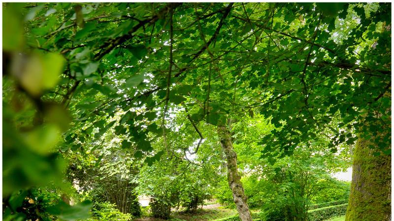 Parc Rochegude, Albi - Tarn