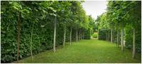 Jardin de la Mothe, Salles-Courbatiers (Aveyron)