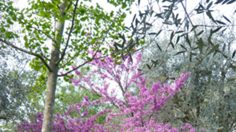 Gattières - Jardin des fleurs de poterie