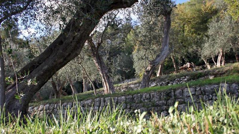 Peymeinade - Mas de l'olivine