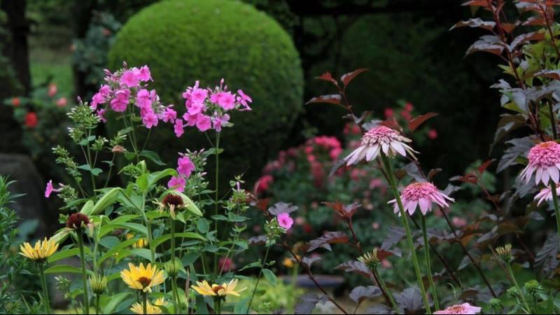 Gros plan sur des fleurs