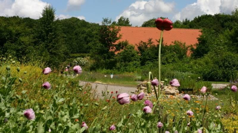 Fleurs sauvages au premier plan, au second une toiture de tuiles entourée de hauts arbres