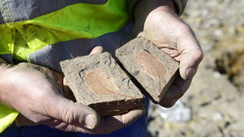 Fouilles paléontologique